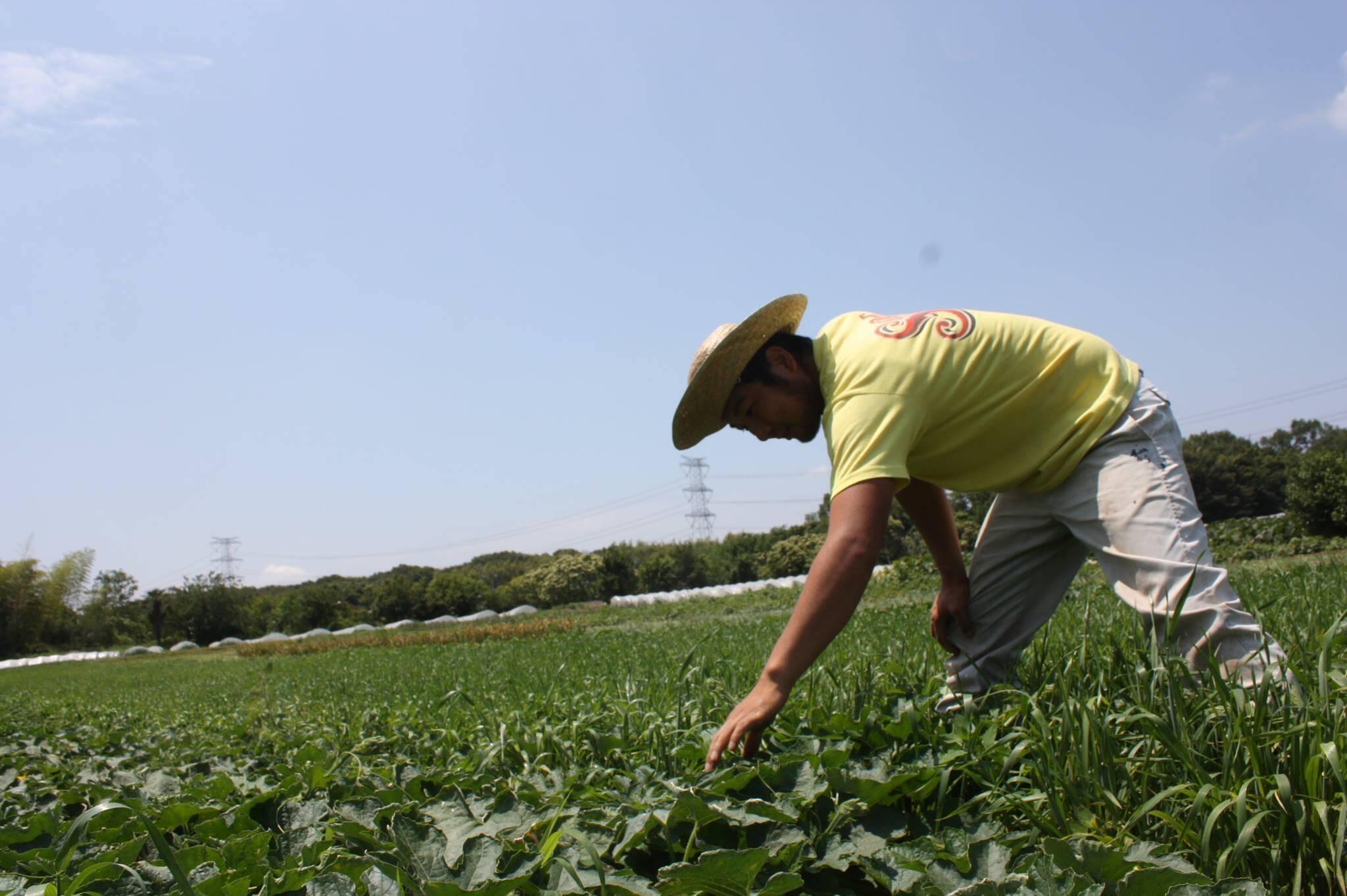 パチャママ農園