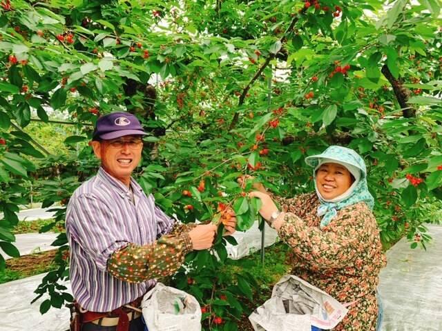 丸末果樹農園