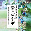 葉っぱ舎(はっぱや)