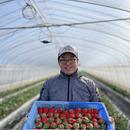 うすいイチゴ農園