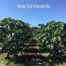 オラソル農園 Hola Sol Hacienda
