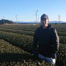 切山園製茶
