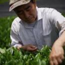 藤迫茶農園