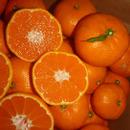 オレンジ  ビオ  ファーム