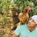 DIEZ  farm