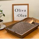 Oliva-Olea(筒木オリーブガーデン)