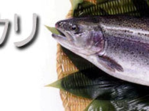 [3ヶ月限定]お米じゃないよ!魚だよ!群馬のブランド鱒ギンヒカリ!