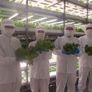 植物工場 スマイルリーフ スピカ