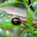 減農薬自然栽培 マーファーム