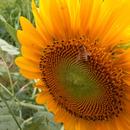 石垣島蜜蜂農園