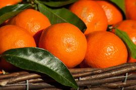 当農園売上第3位❗️☆畑直送☆大特価!こだわり有機栽培野菜8品セット+畑で採れた果物をプレゼント‼️
