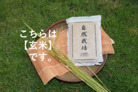 新米販売開始!【名水に育まれた自然栽培米】『元田旭』玄米   5㎏
