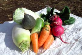 【さいのね畑】旬*お試し野菜セット(5品目)