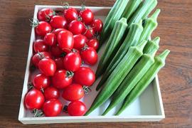 フルーツミニトマト【ジェルバ】&無農薬栽培【オクラ】  お試しセット