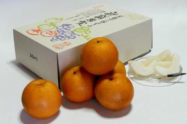 お中元 幸水特撰梨 約3kg 化粧箱入(6〜7玉)