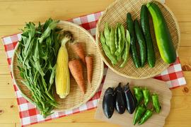 たべくら農園 旬のお野菜おまかせMセット 農薬・化学肥料不使用