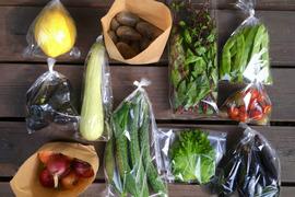 お待たせしました!販売再開*【無農薬】採れたての旬の野菜*小(5-8品目)