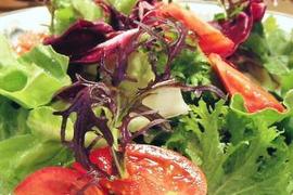☆畑直送Premium☆【福岡県糸島産】朝獲れ*プレミアムサラダ用野菜セット