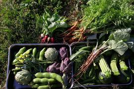旬の野菜の詰め合わせ(6~9品)