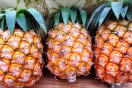 【予約販売】減農薬パイナップル(ピーチパイン) 小玉 3個 【5月発送開始】