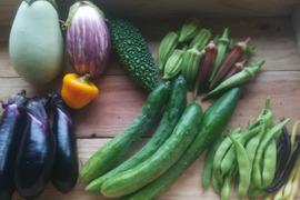 旬の自然農法野菜セット7〜8品程度