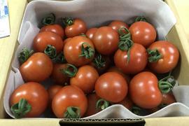 有機トマト【シンディースイート】1kgと玉ねぎ2kg