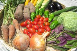 【岐阜産】無農薬*旬の野菜セット(約6〜7品)