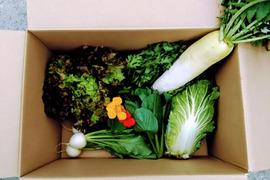 旬の無農薬野菜セット5~7品目