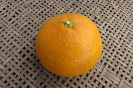 【贈答用】清見オレンジ*3kg
