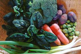 カトリケの季節の野菜おためしセット