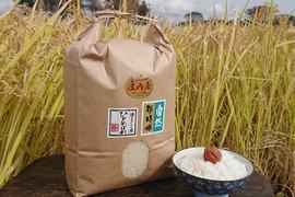 【標準精米 | 5kg】米の旨味たっぷり 自然栽培米 ひとめぼれ