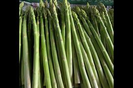 【7月1日~8月中旬頃予約開始】旬の野菜ギフト 夏のグリーンアスパラガス約800g L〜2L
