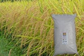 令和元年産 農薬不使用 佐渡コシヒカリ(在来種) 玄米 5キロ