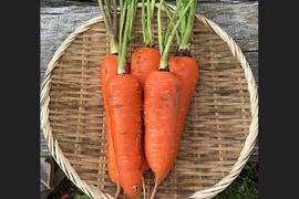 青森県八戸市南郷より 自然農法で育った訳ありにんじん 10kg