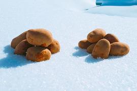 雪室じゃがいも2.5kg〜3種の詰め合わせ〜
