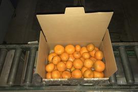 越冬完熟みにくいアヒルの子みかん 3kg