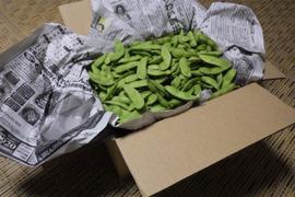 四万十の枝豆2kg