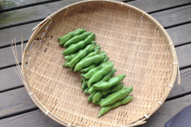 【京都産】そら豆2kg