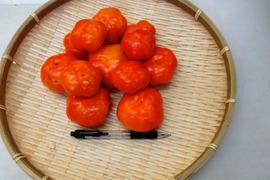 フルーツパプリカオレンジ L~2Lサイズ