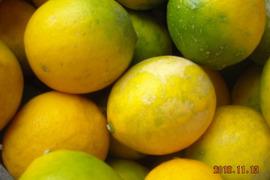 無農薬レモン(L)10個【三重県産】
