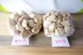 ピンクにんにく種子 (バラ1kg)