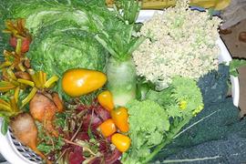 旬の野菜詰め合わせ(5〜6品)