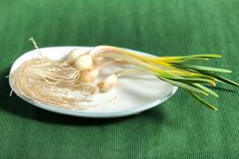 季節限定:有機ニンニクスプラウト(自然栽培)