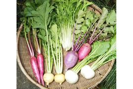 色が楽しい蕪や大根!が入った野菜セット【農薬不使用冷蔵便】