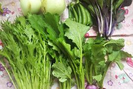 【宮崎県産】うま!あま!玉ねぎと春野菜ミニセット( 5品目)