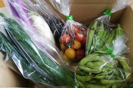 夏野菜セット4〜5種