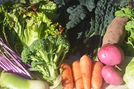【季節のお野菜】さいのね畑の野菜セット[小]