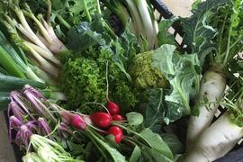 【もりとう農園】お野菜玉手箱 + お米2kgセット