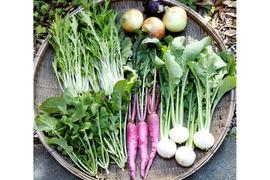シャキシャキ、ポリポリ!露地育ち野菜セット【農薬不使用冷蔵便】