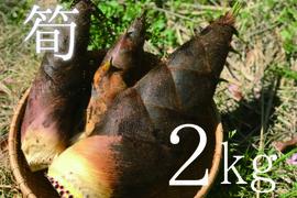【4月限定!採りたてをお届け】孟宗竹たけのこ2kg